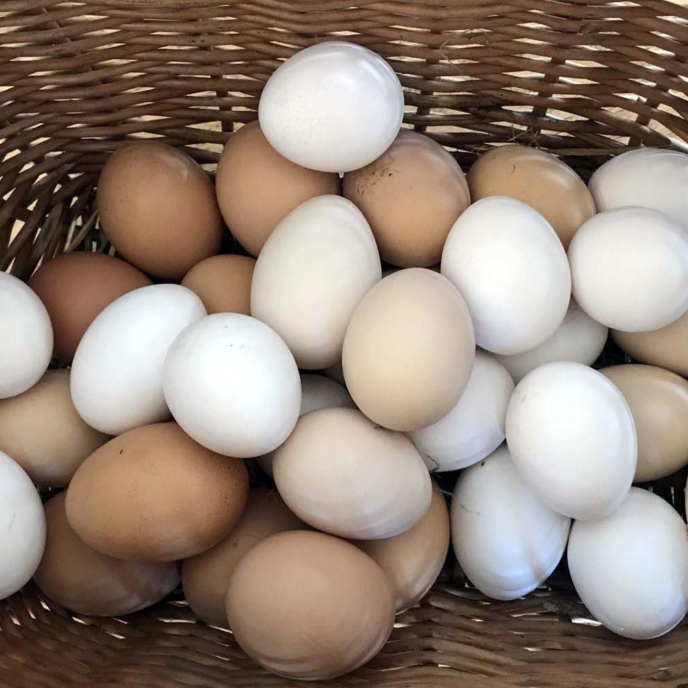 Ägg från lyckliga höns