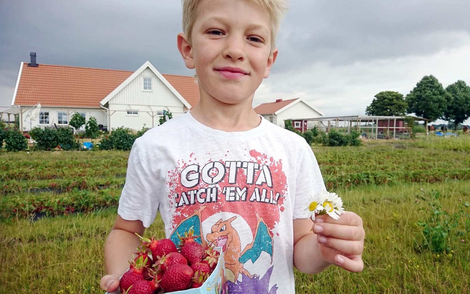 Sven som precis har plockat en låda med de bästa jordgubbarna