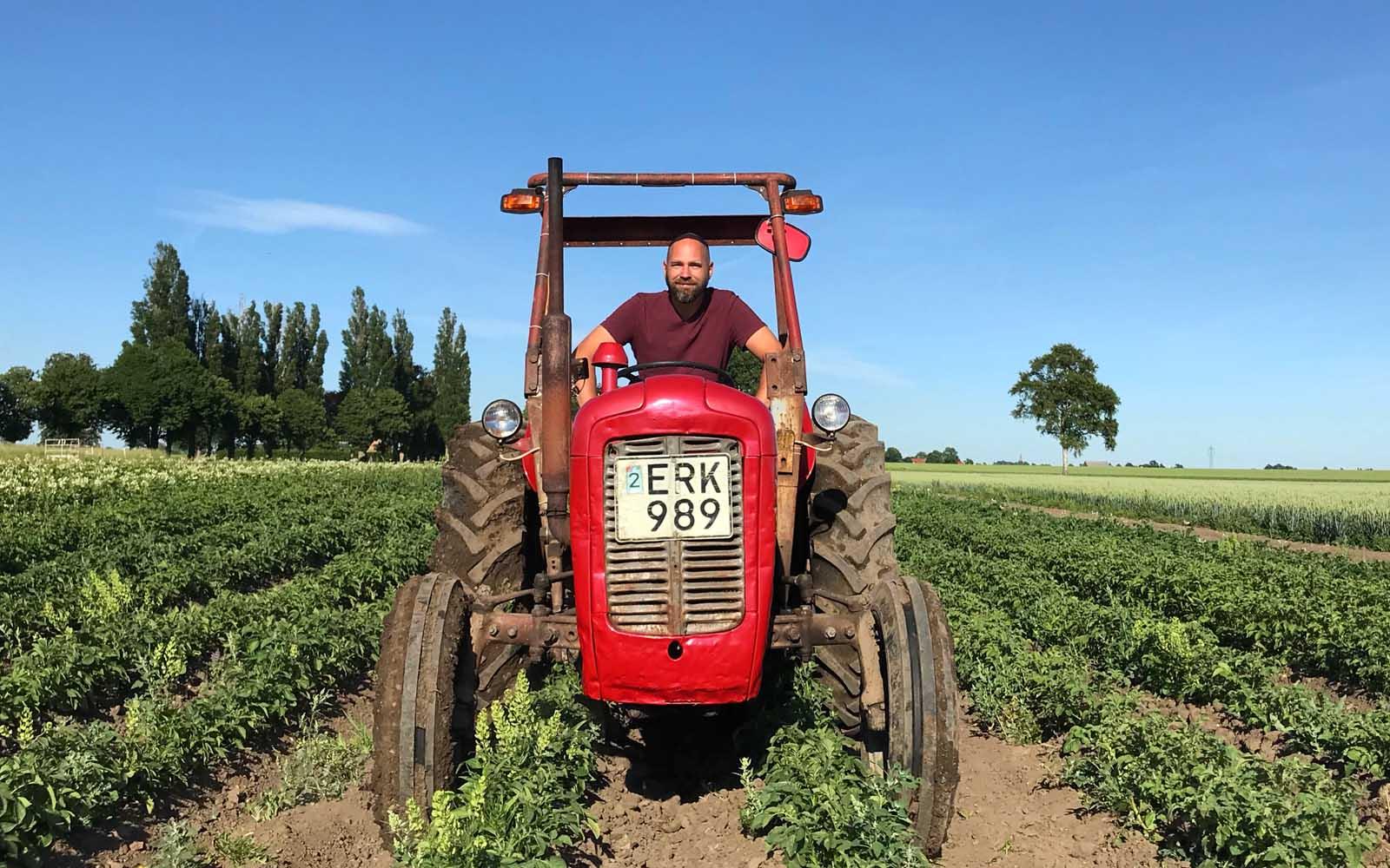 Olof kupar potatisfältet i sin MF35