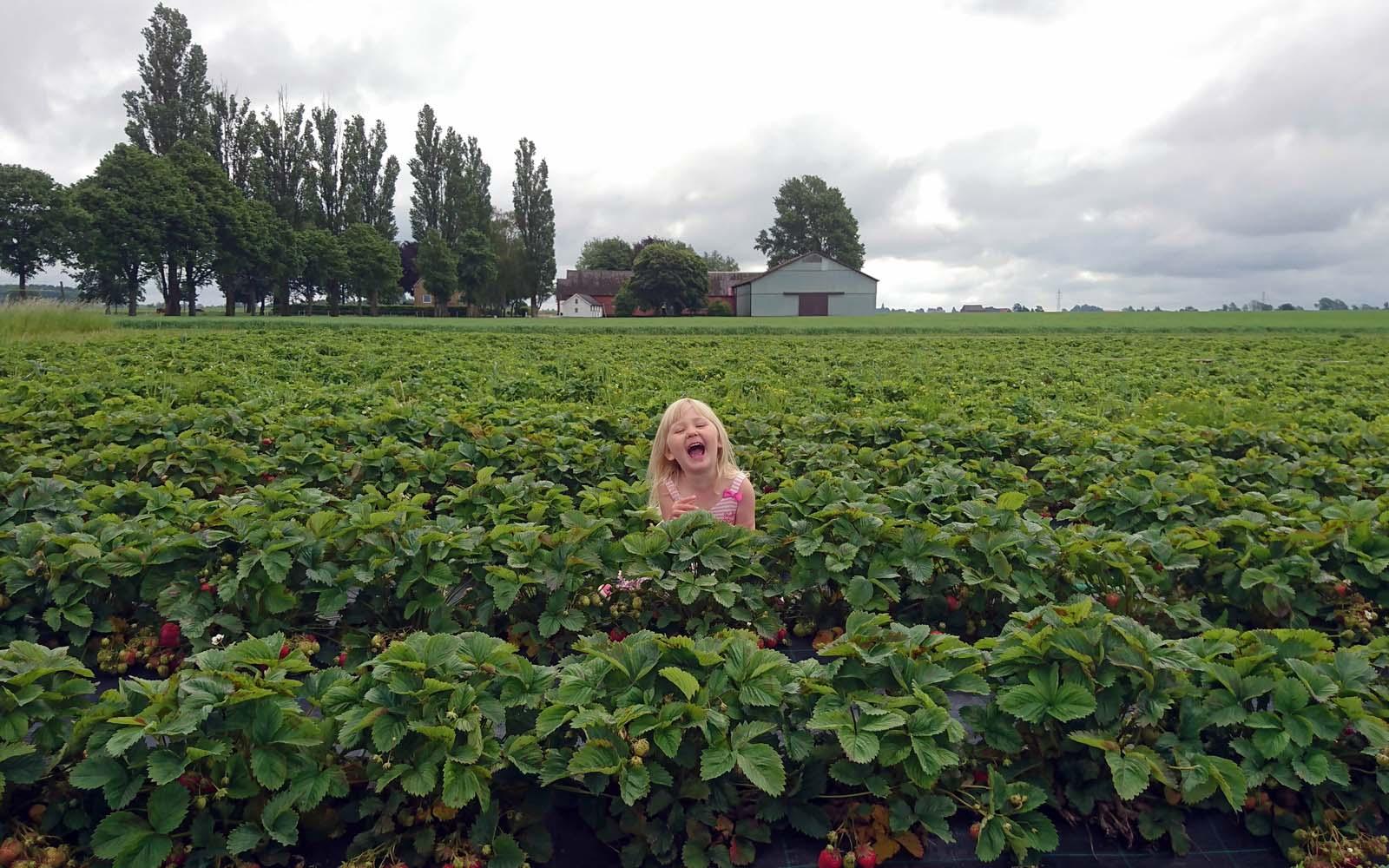 Lilla Ingrid leker bland jordgubbsplantorna