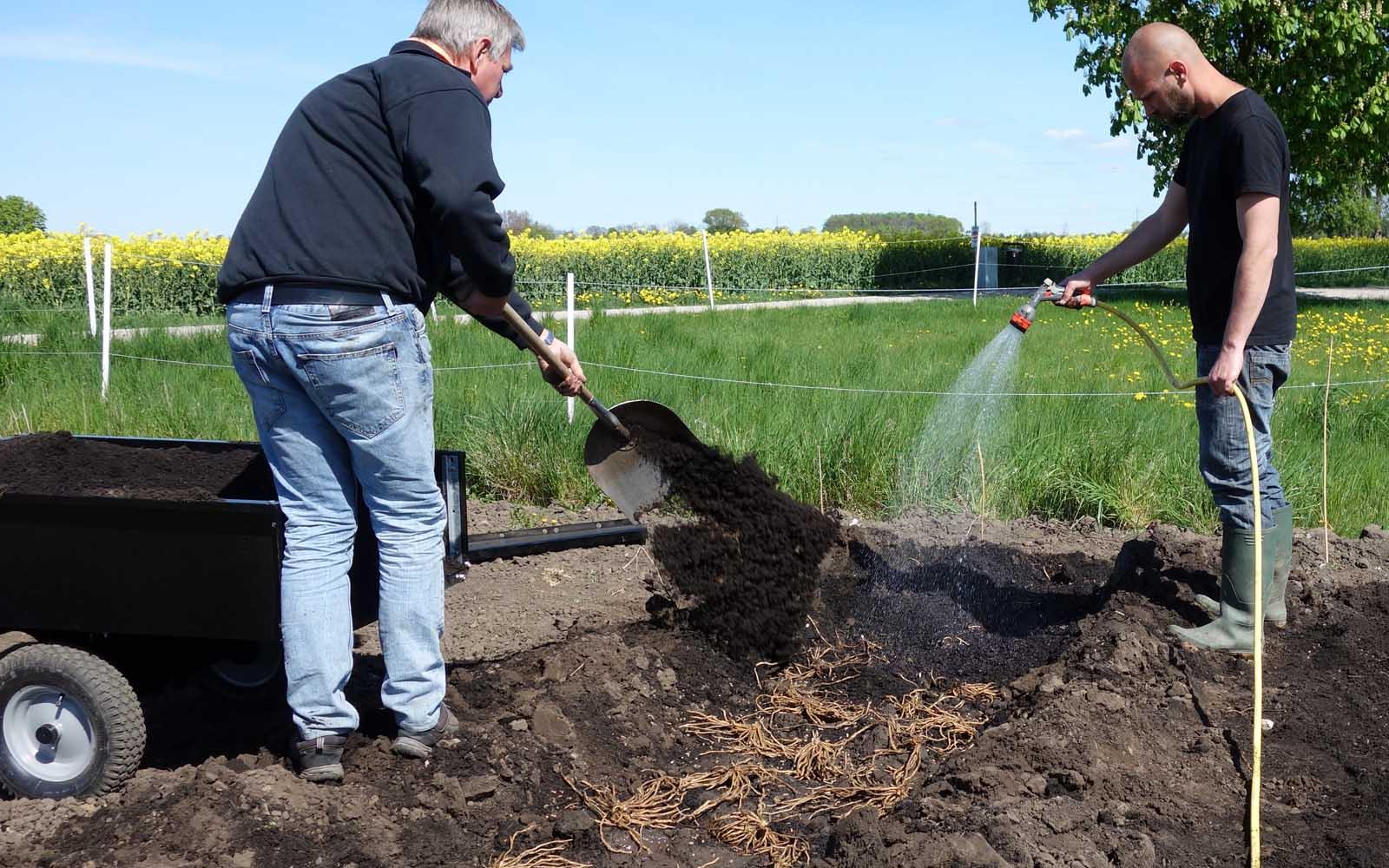 Plantering av sparris