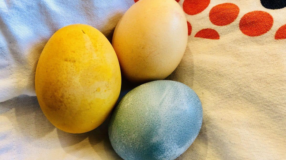 Tre färgade ägg - gult, blått och ljusrött
